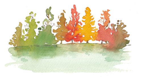 Trees - Watercolor by Eding Illustration